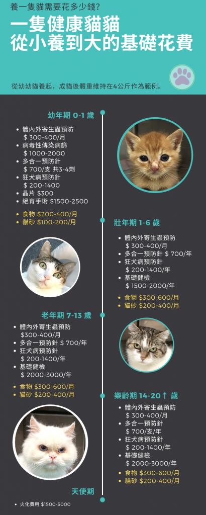養一隻貓需要花多少錢?