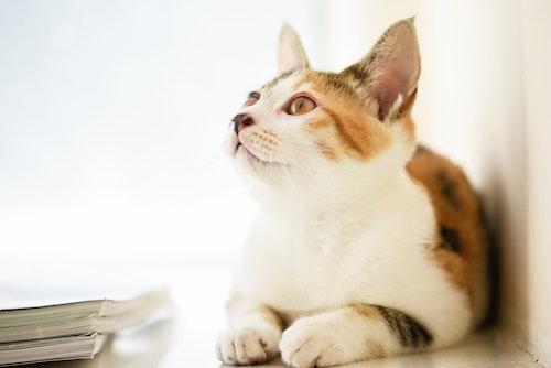 為什麼貓咪需要寵物保險?