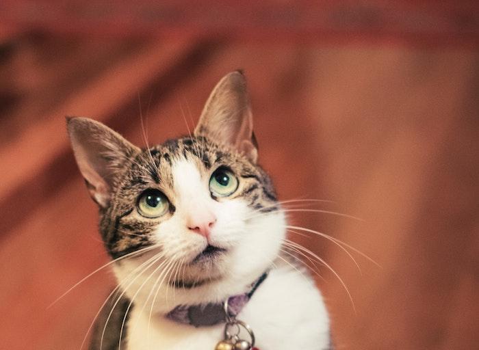 為什麼要幫貓咪絕育呢?